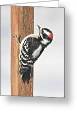 Downy Woodpecker On The Deck Post Greeting Card
