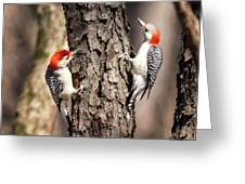 Downy Woodpeckers Greeting Card