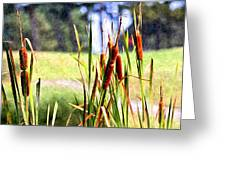 Dragon Fly And Cattails In Watercolor Greeting Card