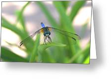 Dragon Fly Personality Greeting Card by Debbie May
