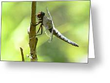 Dragonfly Slow Dance Greeting Card