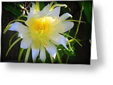 Dragon Fruit Flowering Greeting Card