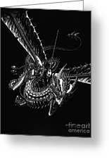 Dragon Knight Greeting Card