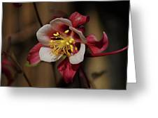 That Red Flower Thing  Greeting Card