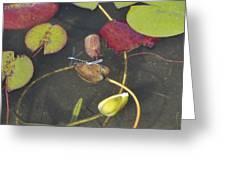Dragonflies Greeting Card