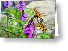 Dragonflies In Summer Greeting Card