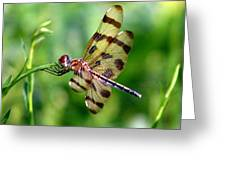 Dragonfly 10 Greeting Card