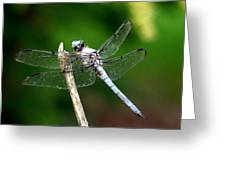 Dragonfly 12 Greeting Card