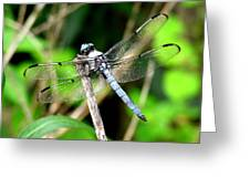 Dragonfly 13 Greeting Card
