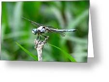 Dragonfly 15 Greeting Card