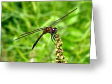 Dragonfly 7 Greeting Card