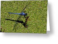Dragonfly 73 Greeting Card