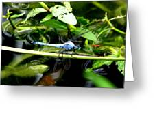 Dragonfly 9 Greeting Card