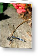 Dragonfly Black-tailed Skimmer Greeting Card