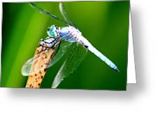 Dragonfly Blue Greeting Card