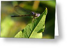 Dragonfly Called Funny Face Greeting Card