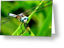 Dragonfly Close Up 2 Greeting Card