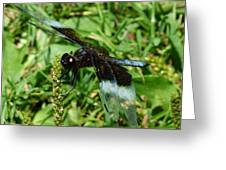 Dragonfly Close Up Greeting Card