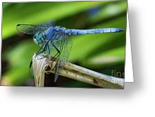 Dragonfly Color Greeting Card