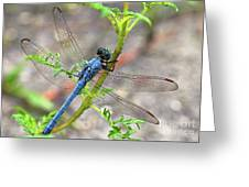 Dragonfly Delight Greeting Card