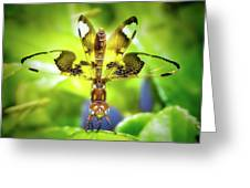 Dragonfly Design Greeting Card