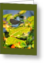Dragonfly Dragonfly  Greeting Card