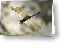 Dragonfly Dreams Greeting Card