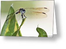 Dragonfly Face Greeting Card