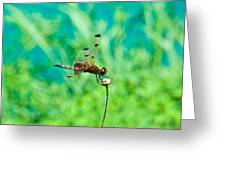 Dragonfly Hanging On Greeting Card