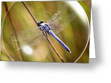 Dragonfly In A Bubble Greeting Card