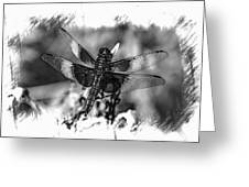 Dragonfly In Black And White Greeting Card