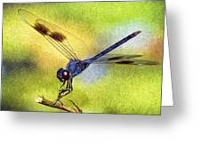 Dragonfly In Blue Greeting Card