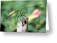 Dragonfly In The Flower Garden Greeting Card