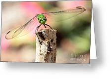 Dragonfly In The Petunias Greeting Card