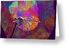 Dragonfly Insect Close Wing  Greeting Card
