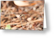 Dragonfly Karaoke Greeting Card