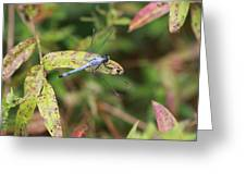 Dragonfly Leaf Greeting Card