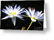 Dragonfly Lily Greeting Card
