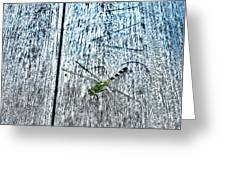 Dragonfly On A Bench Greeting Card