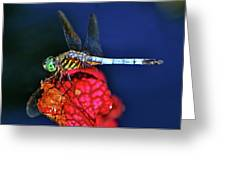 Dragonfly On A Pitcher Plant 009 Greeting Card