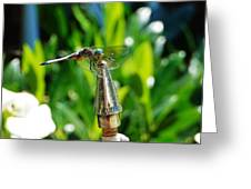 Dragonfly On Flag Post Greeting Card