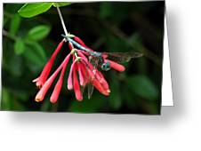 Dragonfly On Honeysuckle Greeting Card