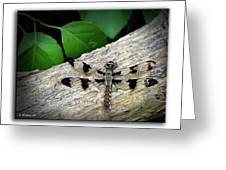 Dragonfly On Log Greeting Card