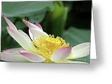 Dragonfly On Lotus Greeting Card