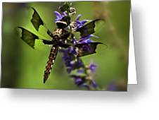 Dragonfly On Salvia Greeting Card