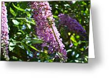 Dragonfly On The Butterfly Bush Greeting Card