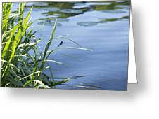 Dragonfly On The Lake Greeting Card