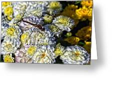 Dragonfly On White Mums Greeting Card