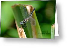 Dragonfly One Greeting Card