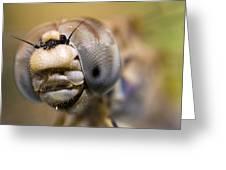 Dragonfly Portrait Greeting Card